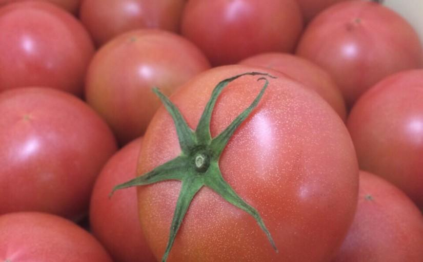 赤い瞳トマト