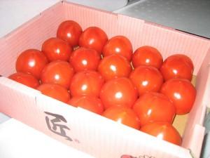 匠フルーツトマト