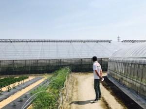 橋本農園2