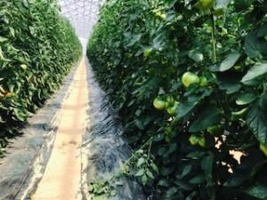 橋本農園3