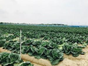 斉田農園4