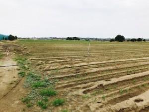 中原農園3