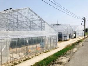 橋本農園4